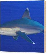 Silvertip Shark, Kimbe Bay, Papua New Wood Print