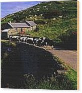 Slea Head, Dingle Peninsula, Co Kerry Wood Print