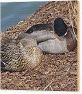 Sleeping Ducks Wood Print