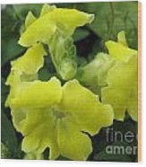 Snapdragon From The Mme Butterfly Mix Wood Print
