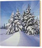Snow-covered Pine Trees Wood Print