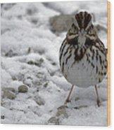 Snow Sparrow Wood Print