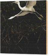 Snowy Egret, Florida Wood Print