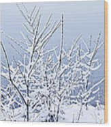 Snowy Trees Wood Print by Elena Elisseeva