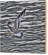 Soaring Gull Wood Print