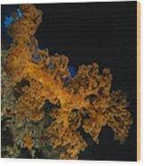 Soft Coral Seascape, Fiji Wood Print