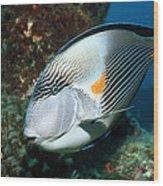 Sohal Surgeonfish Wood Print by Georgette Douwma