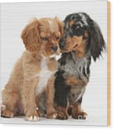 Spaniel & Dachshund Puppies Wood Print by Mark Taylor