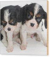 Spaniel Puppies Wood Print