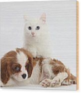 Spaniel Puppy And Kitten Wood Print