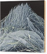 Spider's Web, Sem Wood Print