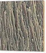 Spinal Cord, Sem Wood Print