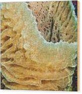 Sponge Wood Print