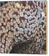 Spotted Starfish Wood Print