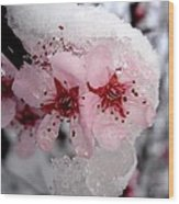 Spring Blossom Icicle Wood Print