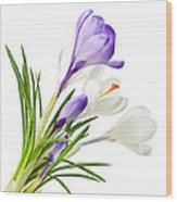 Spring Crocus Flowers Wood Print