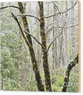 Spring Snow Along Williams River Scenic Byway Wood Print