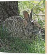 Spring Time Rabbit Wood Print