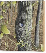 Springtime At Collins Creek Wood Print