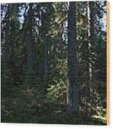 Spruces Wood Print