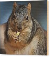 Squirrel Eating Corn Wood Print