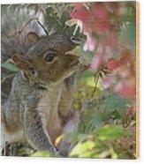 Squirrel In Fall Wood Print