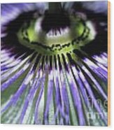 Stamen Of A Passionflower Wood Print