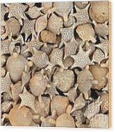 Star Sand Foraminiferans Wood Print