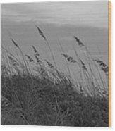 Summer Fairwell Wood Print