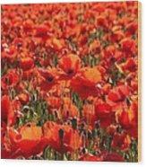 Sun Poppies Wood Print