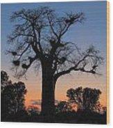 Sunset Baobab Wood Print