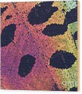 Sunset Moth Urania Ripheus Wood Print