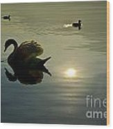 Swan And Ducks Wood Print