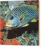 Sweetlips Fish Wood Print