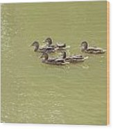 Swimming Ducks Wood Print by Corinne Elizabeth Cowherd
