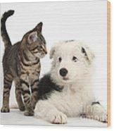 Tabby Kitten & Border Collie Wood Print