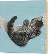 Tabby Kitten In Hammock Wood Print