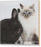 Tabby-point Birman Cat And Black Rabbit Wood Print