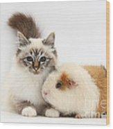 Tabby-point Birman Cat And Guinea Pig Wood Print
