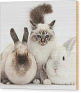 Tabby-point Birman Cat And Rabbits Wood Print