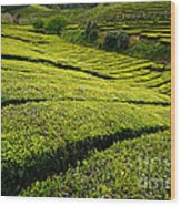 Tea Gardens Wood Print