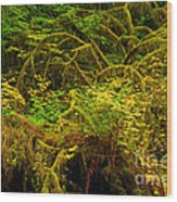 Temperate Rain Forest Wood Print by Adam Jewell