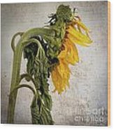 Textured Sunflower Wood Print by Bernard Jaubert