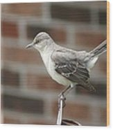 The Mocking Bird Wood Print by Rick Friedle