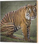 The Sumatran Tiger  Wood Print