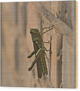 The Visitor Wood Print