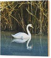 The White Swan Wood Print