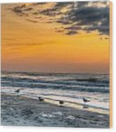 The Wintery Feeling Beach At Sunrise Wood Print