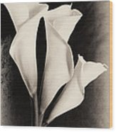 Three Calla Lilies Wood Print by Lisa  Spencer