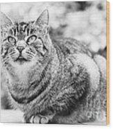 Tomcat Wood Print by Frank Tschakert
